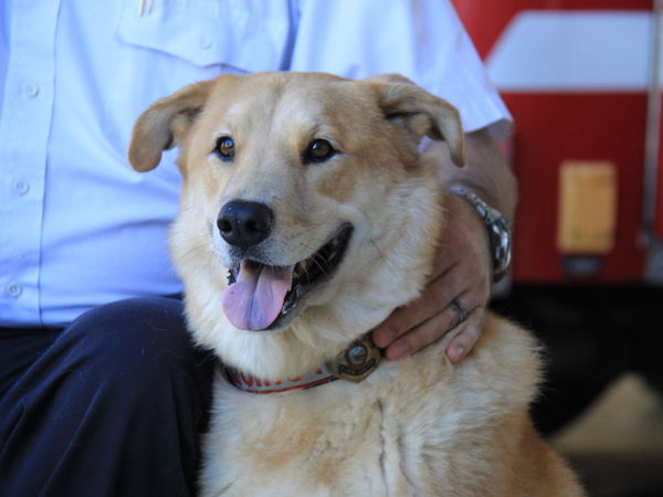Vote for Quincy for the American Humane Hero Dog Awards