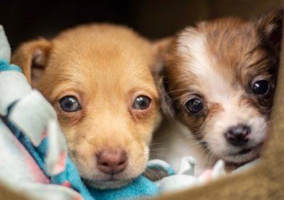 After Puppy Love