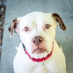 Adopt a Senior Dog Month